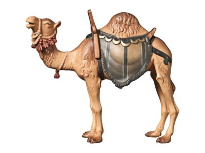 A Kamel color