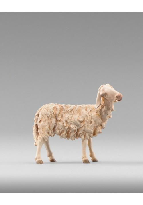 Immanuel Schaf zurückschauend color