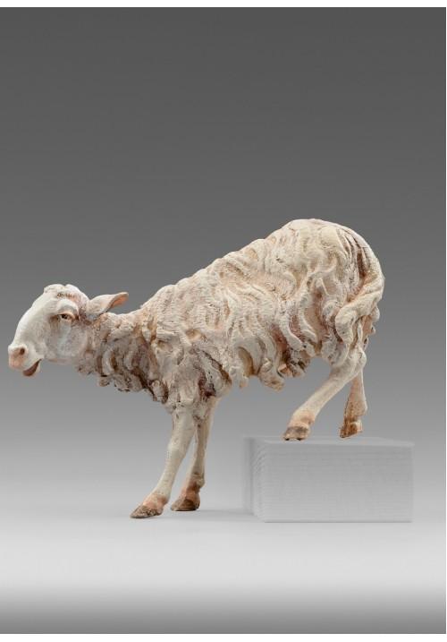 Immanuel Schaf für Stufe color