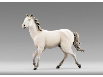 Immanuel Pferd, weiss