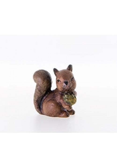 Eichhörnchen color